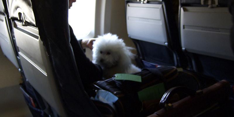 como-viajar-con-tu-perro-a-estados-unidos Ralph Daily