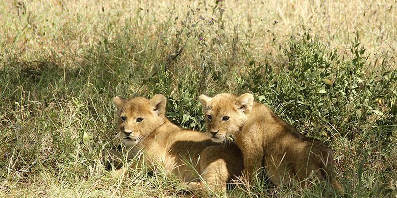 mejores safaris África 11