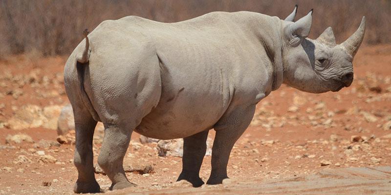 mejores safaris África