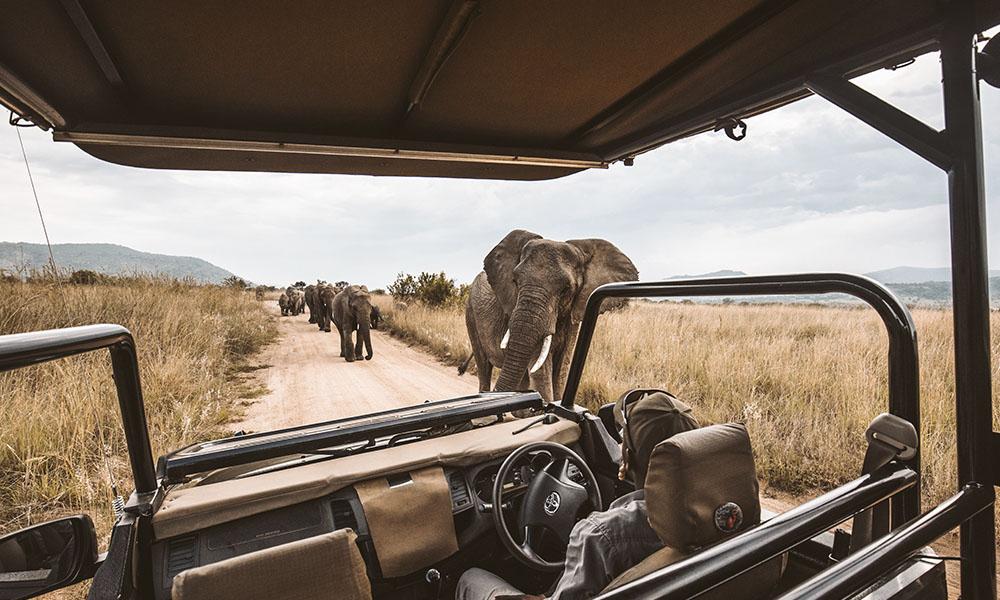 mejores-safaris-africa