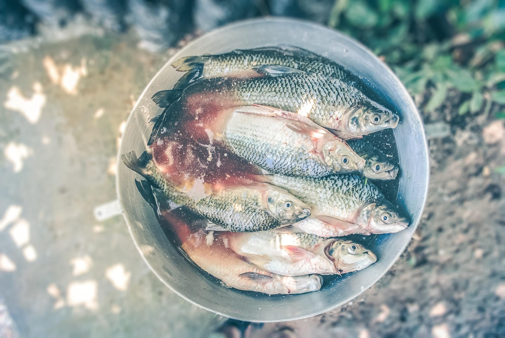 Salando pescado
