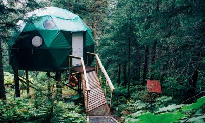 Airbnb en el bosque