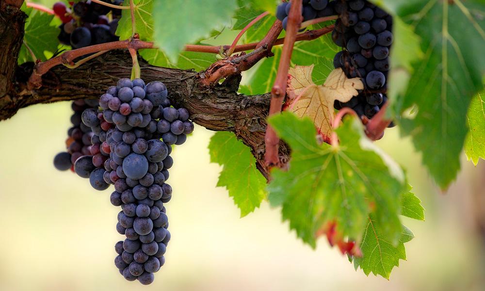 ribera-del-duero-ruta-vino