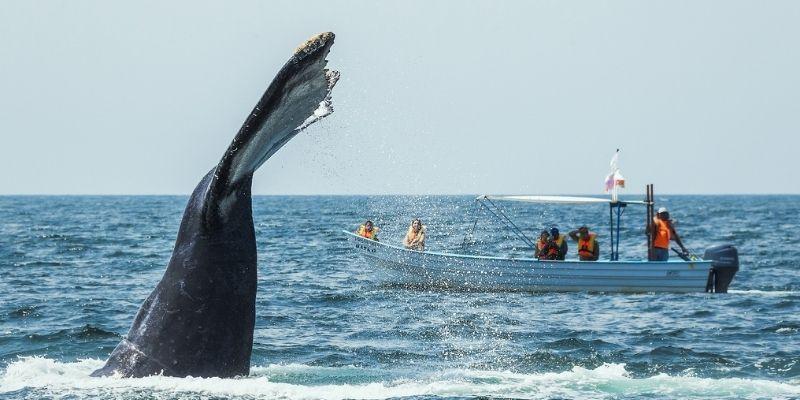 ¿Es seguro visitar Riviera Nayarit?