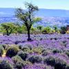 Cómo redescubrir San Miguel de Allende y mantener la sana distancia