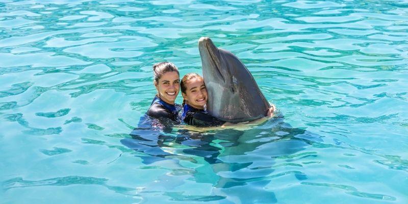 Los mejores lugares para ver e interactuar con delfines en Florida.