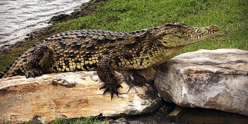 6 razones para visitar Wild Florida