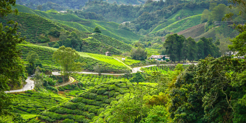 malasia razones viajar