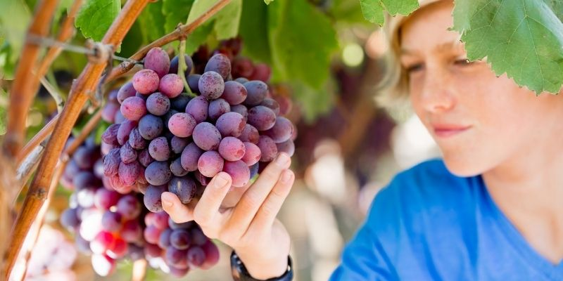 Valle de Guadalupe: 10 errores comunes de la Ruta del vino