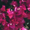 flores de mexico